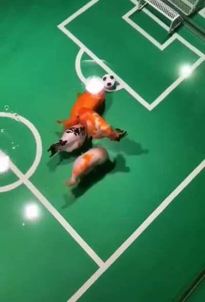 Goldfish playing soccer