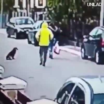 Superdog: A man tried to steal a woman and the dog bit him.