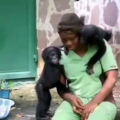 These baby bonobos were rescued, all they wanted was a mom ❤