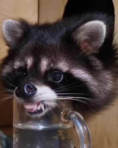 Just getting a lil drink