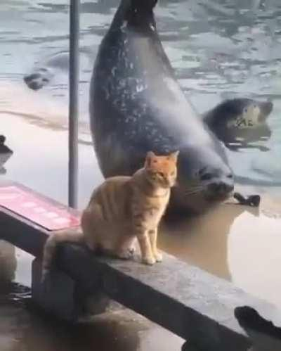Trying to impress cats and failing is universal