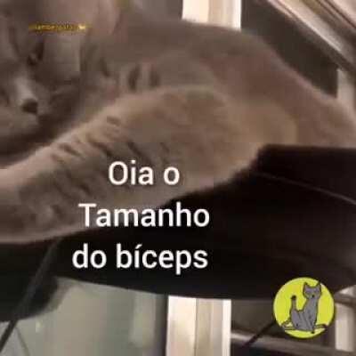 triceps do gato