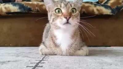 Cat watching a horror movie. [Watch*cat*dieinside] (u/freshOstrich6)