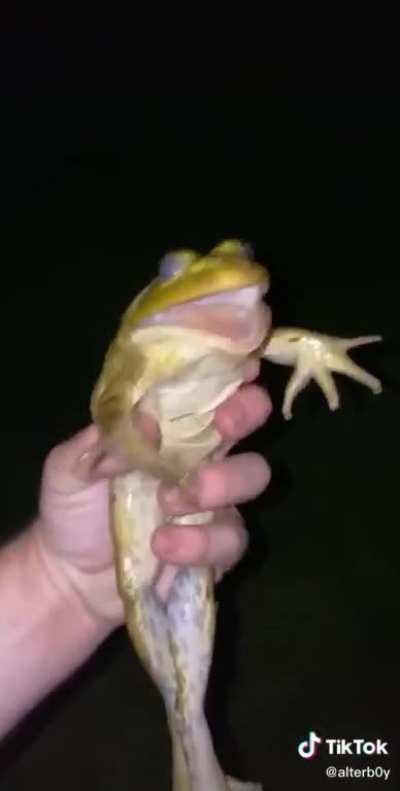 Chill Kermit