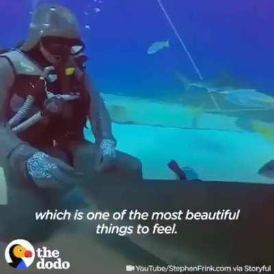 Building trust turns sharks into underwater danger doggos