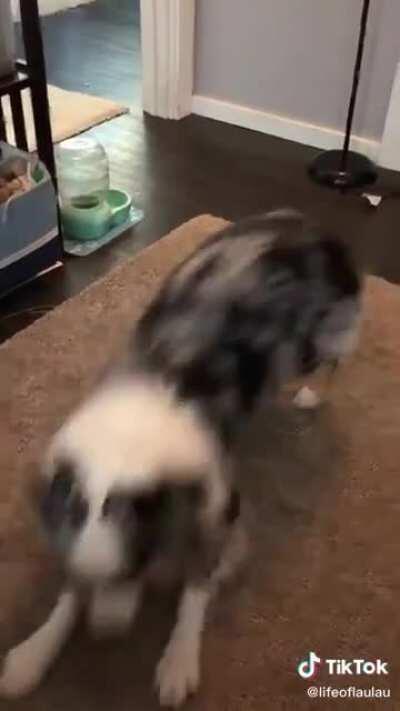doggo throws it back.
