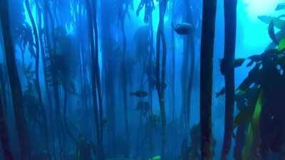 Underwater background... not a great loop