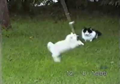 My dad filmed our cats for hours when we were growing up