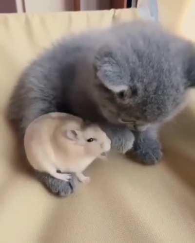 Let me love you little cat!