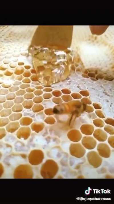 Bee keeping 101