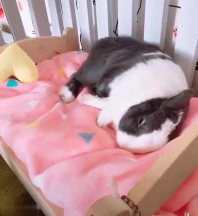 The way it makes its bed and falls to sleep blissfully.