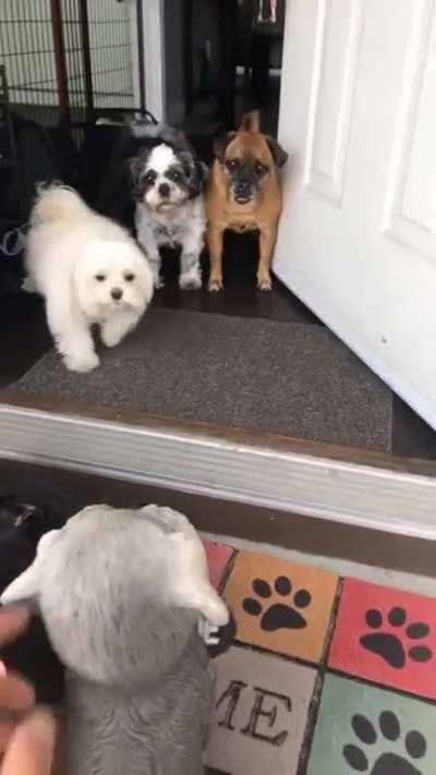 Surprising them with a new friend...