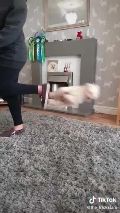 This little dog has moves