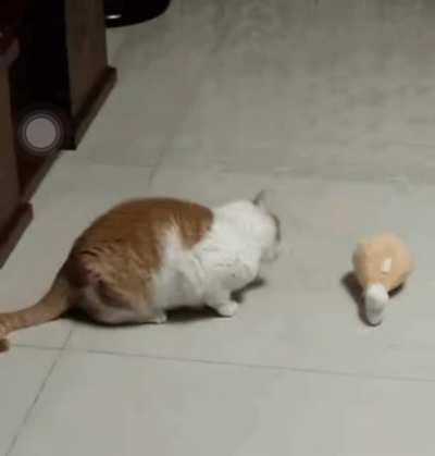 Kitty vs. Drumstick