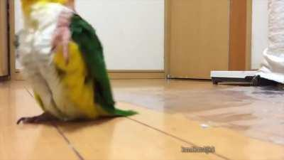 Parrot on Stroll