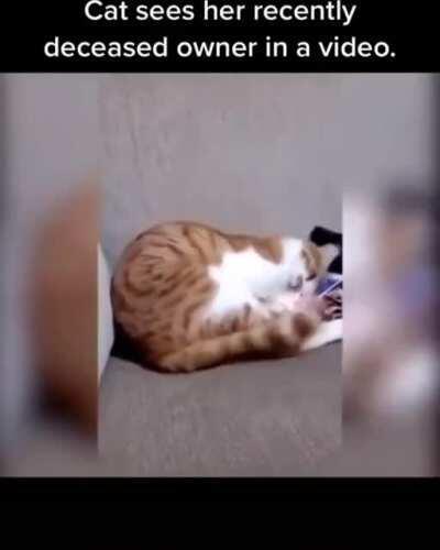 This is sad cat.
