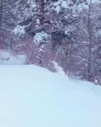Jumpy snowplow