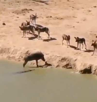 Warthog in dead end