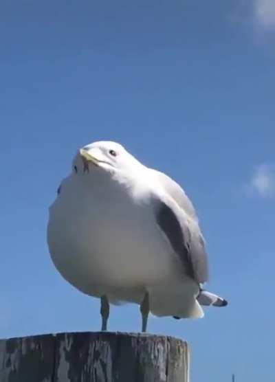 Do seagulls count?