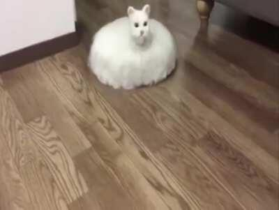 Cat roomba Most HD I could find