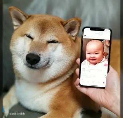 n sei se já postaram mas achei um videozinho do dog dos memes