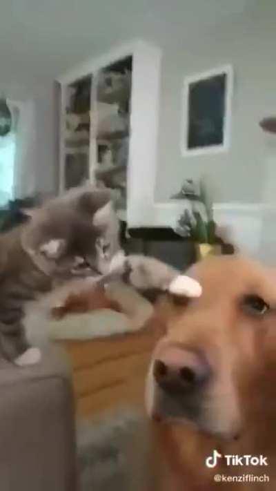 Good Dog, Sweet Boy!