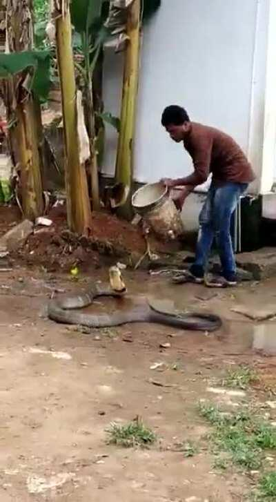 Man Helps King Cobra cool down in 47°c scorching unbearable heat.