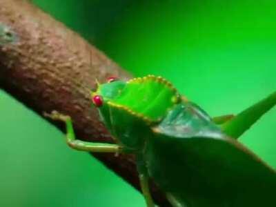 Pygmy Marmoset & Large Insect