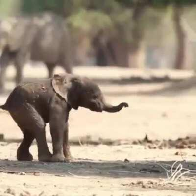🔥 Baby elephant's first steps 🔥