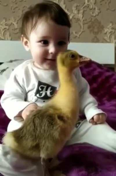 This duck has the complete attention of a baby...