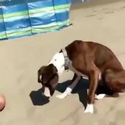 Dog gets bamboozled