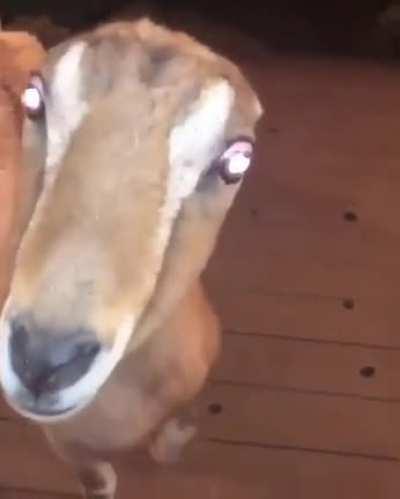cursed_goat
