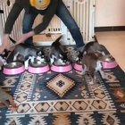 Quite a workout feeding 5 pups.