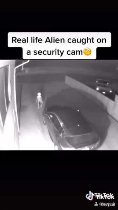 These are obviously fake and this guy's on my front page a lot. Anyone know where he's getting the videos from? (Comments never suggest that it's fake)