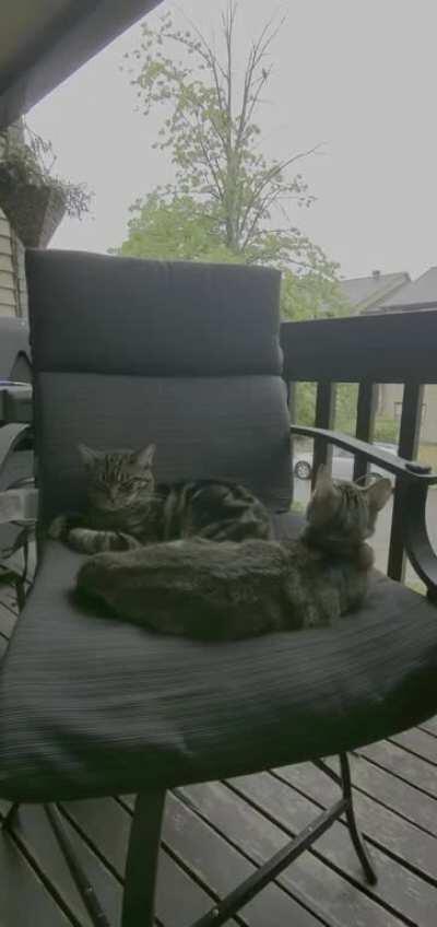 Even kittens enjoy sleeping to the sound of rain.