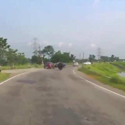 Rhino rampaging on a road in India
