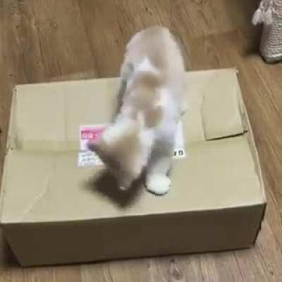 BruTAL aSSASSiN MUrderS iNNocENt VIcTiM from an UnMaRkeD pACKAgE