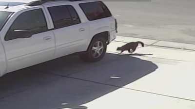 Tara the cat body slams a dog to save her owner's son