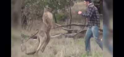 That fucking roo deserved it