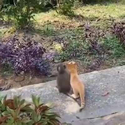 A Little Monkey Hugging Its Best Friend