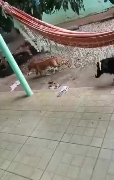 Doggo is a son of a bi***