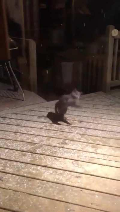 This cat catching snowflakes