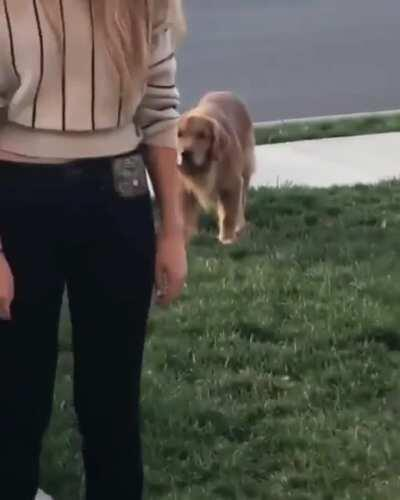 Pupper think he's sneaky