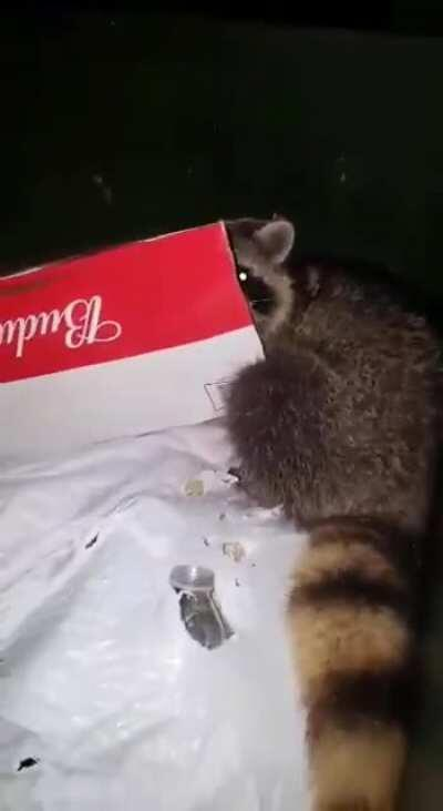 Found raccoon in trash and he wasn't having it today lol
