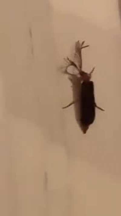 The Eyelash bug