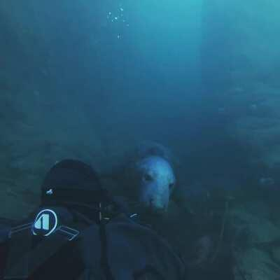 UK Diving has magic moments as well :) Just off the coast here in Northumberland before the lockdown got us. We named him Dan 😂