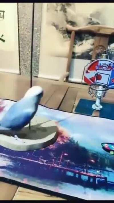 There's nothing this bird can't do.