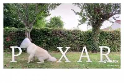Pixar pup (by @lifeofkaix)