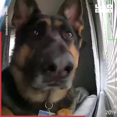 Good boy trips the security camera