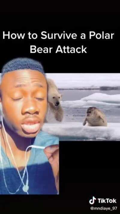 How to survive a polar bear attack